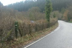 Some of the roadside hedge at Maespoeth has been trimmed back …
