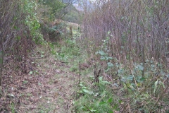 Tuesday, 11.10.2016. During the day, Tony has been clearing a way through to the farm boundary gate below Maespoeth Yard – it just needs widening out now …