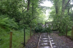 … greeted by a great crashing sound after the 12.00 train as a large branch lands across the railway …