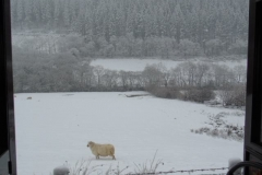 Not much fun being a sheep in winter !
