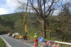 … leaving just one branch of an oak tree near Pont Evans to be removed, which the Trunk Roads Authority have been worrying us about.