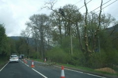 Friday, 14.5.2021. Just one more (oak) tree to be felled, here opposite Brynllwyd Bach – nothing to do with us except it overhung the electricity transformer for Maespoeth Sheds!