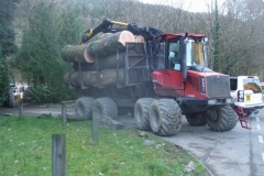 Some of the trees coming out from the BETWS Project are rather large!