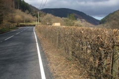 Earlier in the week, our roadside hedge South of Maespoeth had been cut by a local contractor.