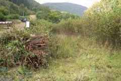 Tuesday, 27.9.2016. With the land south of the Yard finally in the railway's ownership, Tony has made a good start on cutting down self-setting trees on the farm access track below the new railway embankment.