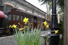 Sunday, 27.3.16. The weather over the weekend has deteriorated, but the daffodils are still in flower …