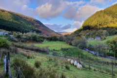The autumn colours as viewed from near Corris, are quite striking. (AR)