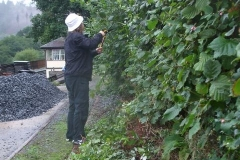 … and Richard attacks the hedge on the Upper Corris branch siding …