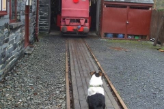 … but to ease access, locos have been partially pushed out of the Engine Shed, here guarded by Mollie!