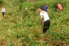 Scouts help to clear the bracken...