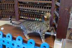 The local cat looks around the museum...