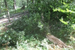 Storm Francis has brought a large branch down across the line – until cleared by Jack.