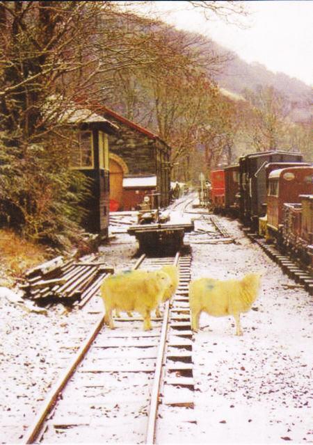Where are ewe going?